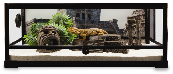 Create A Tortoise Habitat Terrarium Decor And Supplies Petsmart